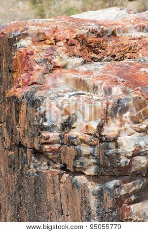 Close up of Petrified Wood