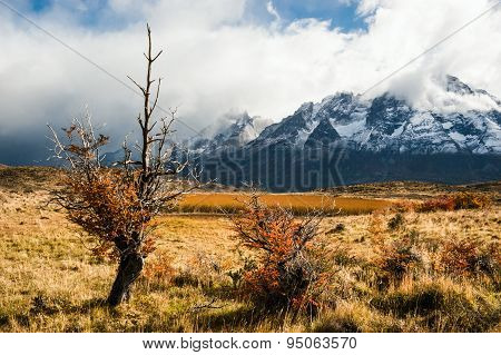 Autumn In Patagonia. The Torres Del Paine National Park