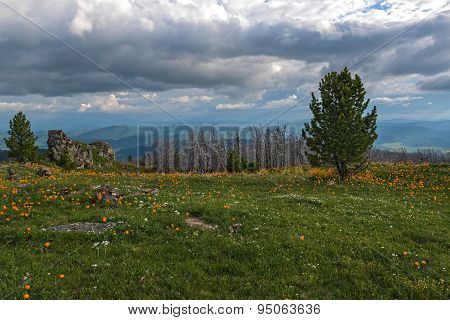 Flowers Meadow Mountains Sky