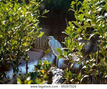 Bird Amongst The Mangroves