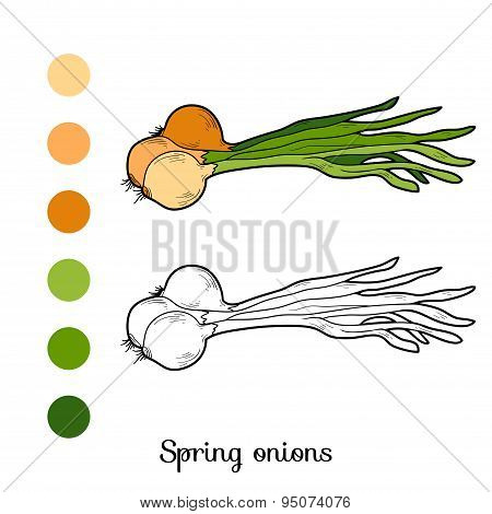 Coloring Book: Fruits And Vegetables (spring Onions)