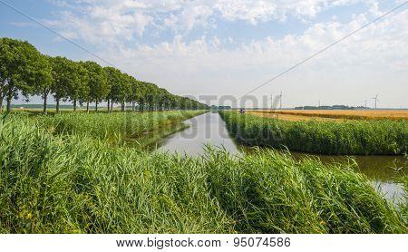 River through sunny farmland in summer