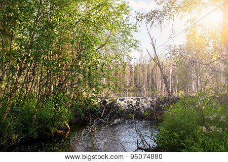 Summer Landscape. North Karelia. Russia