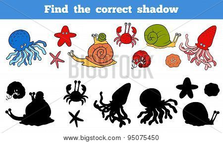 Find The Correct Shadow (sea Life, Fish, Octopus, Snail, Stars, Crab)