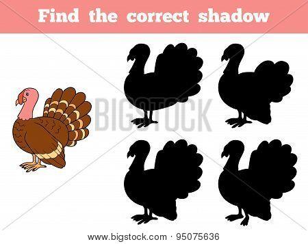 Find The Correct Shadow (turkey)