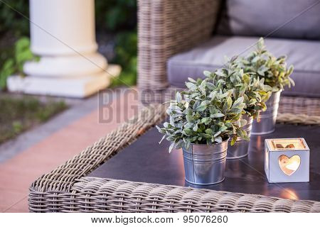 Flower Pots On The Table