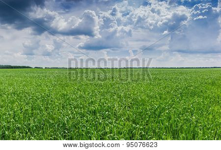 Field With Green Grasses
