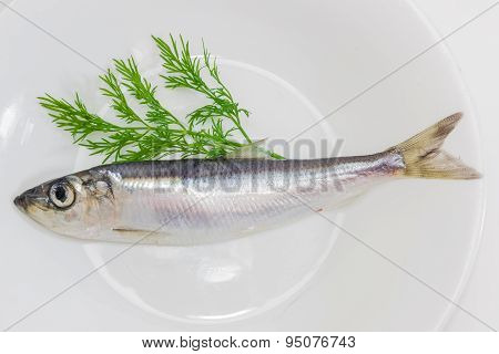 Sprat And Dill On A Dish