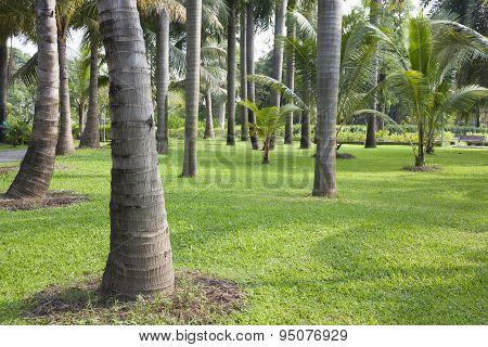 Manila Palm Park