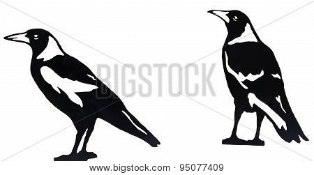 Magpie birds isolated on white