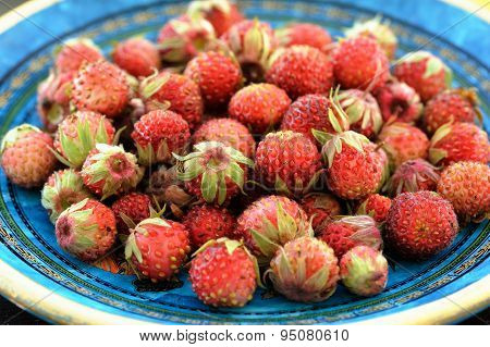 Wild Strawberries Fragaria Viridis In Blue Plate
