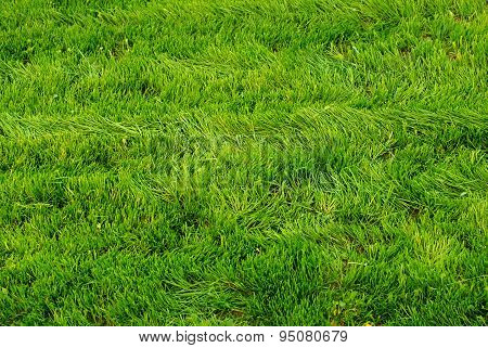 Mowed Grass