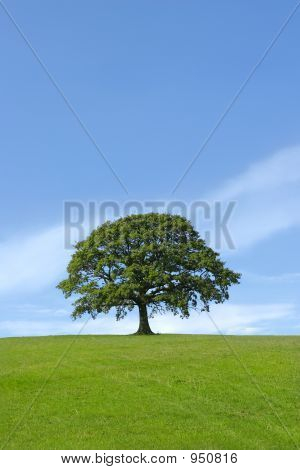 The Mighty Oak