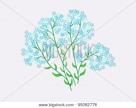 Flowers blue forget-me-nots natural background