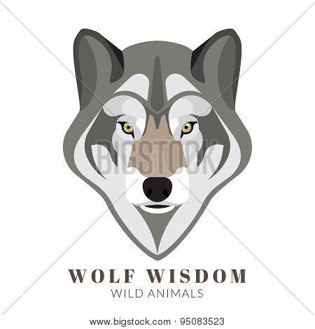 Cute grey wolf