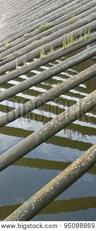 Water And Timber Needles