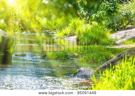 Stream In The Green Forest