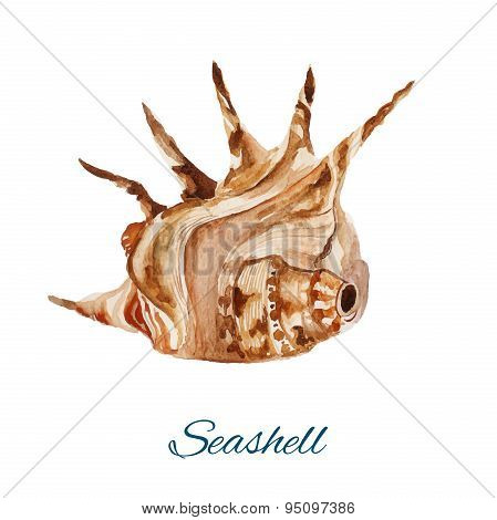 seashell. watercolor painting on white background