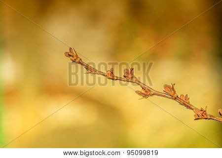 Branch In Spring