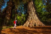 foto of redwood forest  - Woman with rucksack standing near the big tree in Redwood California during summer sunny day - JPG