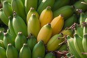 foto of banana  - Bunch of bananas on a banana plantation in India - JPG