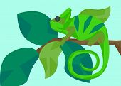 picture of chameleon  - Green chameleon masquerades as the color of the leaves on the branch on which it sits - JPG