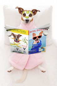 pic of cucumbers  - jack russell dog relaxing and lying in spa wellness center getting a facial treatment with moisturizing cream mask and cucumber while reading a magazine or newspaper - JPG