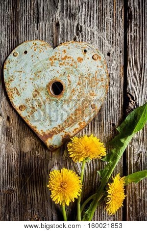 Keyhole - rusty heart and dandelions on old wood background. Vertical shot.
