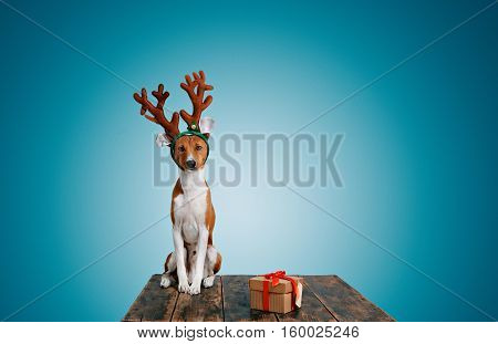 Adorable puppy wearing reindeer antlers sitting next to a gift box with red bow tilts his head and looks into the camera on light blue background.