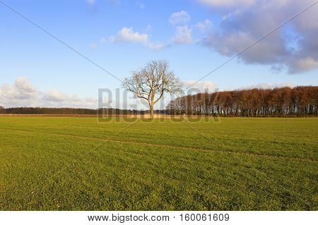 Ash Tree And Wheat