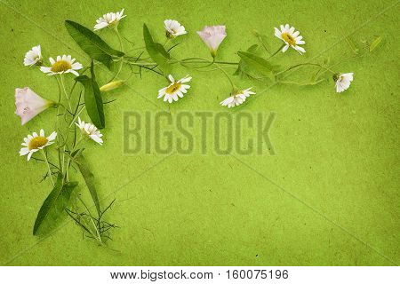 Bindweed and daisy flowers with card isolated on white