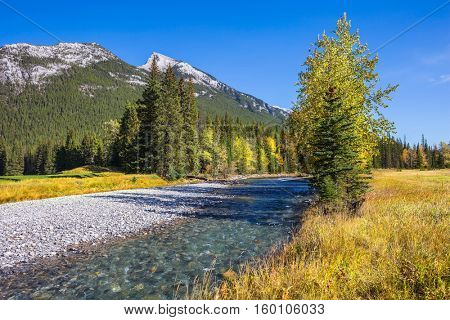 Dry creek in mountain valley Banff park. Autumn day in the Canadian Rockies