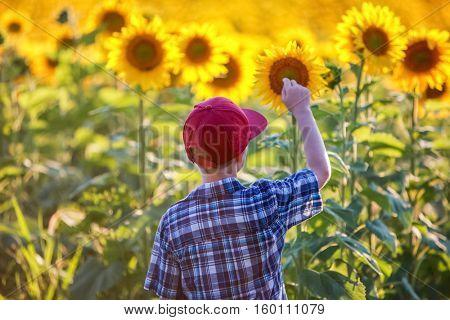 Boy touching a sunflower, focus on hat