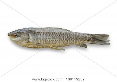dried fish isolated on white background File contains a clipping path.