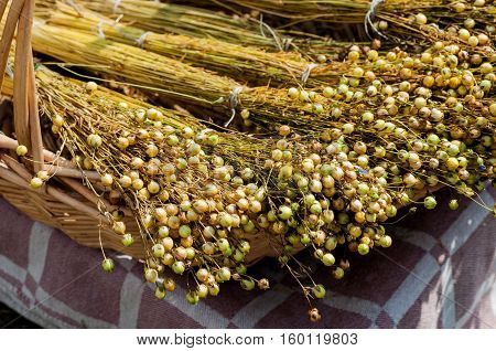 Basket with decorative dried flax bunches close up