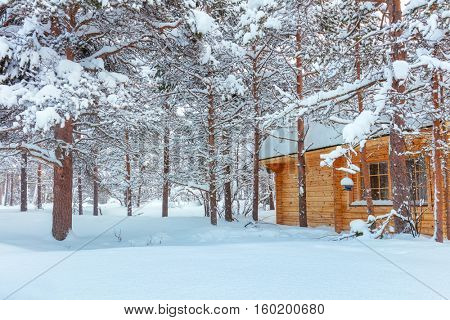 Winter forest Landscape after blizzard with small wooden house, big pine trees covered snow, beautiful winter weather