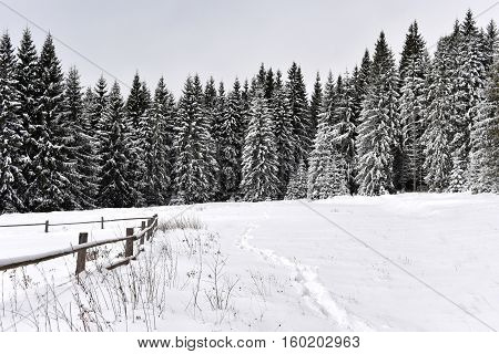 Winter Landscape In The Forest With Snow Covered Trees