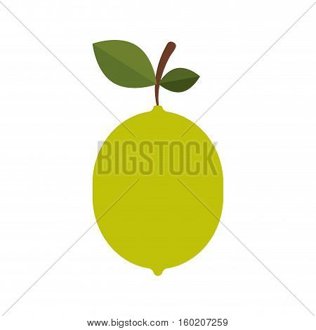 silhouette colorful lemon with stem and leafs vector illustration