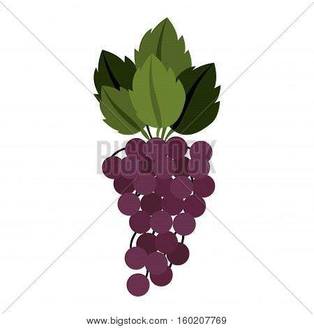 silhouette colorful of bunch grapes with stem and leafs vector illustration