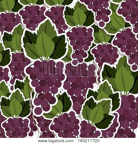 silhouette colorful pattern of bunch grapes with stem and leafs vector illustration