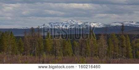 snow-covered mountains with green forest in the foreground in South Yakutia Russia