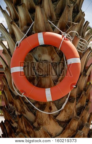 Life Ring Buoy Hanging on A Palm Tree.