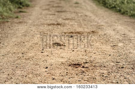 trace of the hoof of the horse on the sandy road in the woods