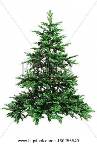 bare Christmas tree isolated on white background