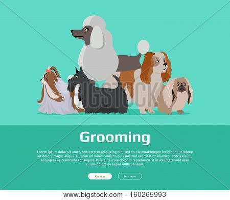 Dog grooming banner. Long haired dog breeds of different size isolated on green background. Pekingese, Shih Tzu, Poodle, Scottish Terrier, Aberdeen Terrier. Dog pet shop banner poster. Vector.