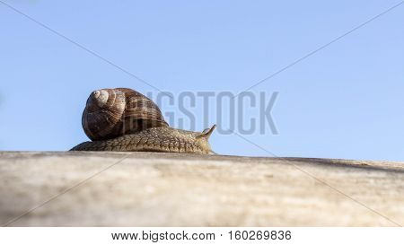 Nature, crawling snail in the early morning.