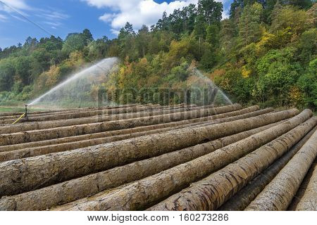 Irrigation of tree trunks in a wet storage on a forest edge