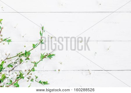 Spring flowers. Apple flowers on white wooden background. Flat lay top view