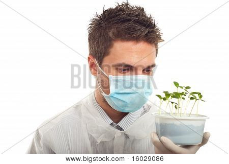 Researcher Man Holding New Cucumber Plants
