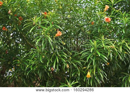 Closeup of a shrub with beautiful exotic flowers. Background